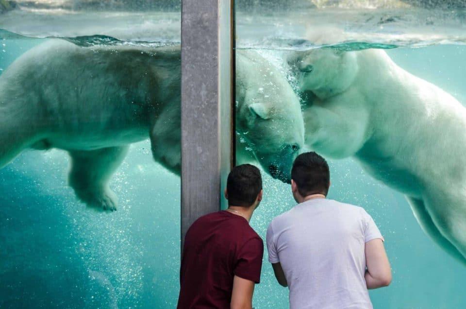 Québec – Zoo sauvage de St-Félicien