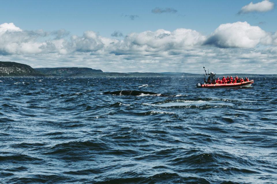 Québec – Les baleines du Saint-Laurent