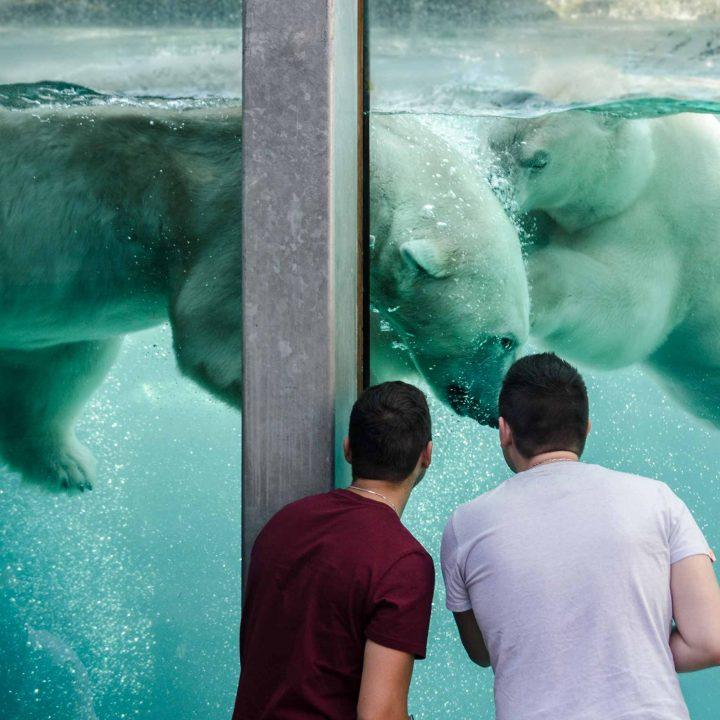Québec - Zoo sauvage de St-Félicien