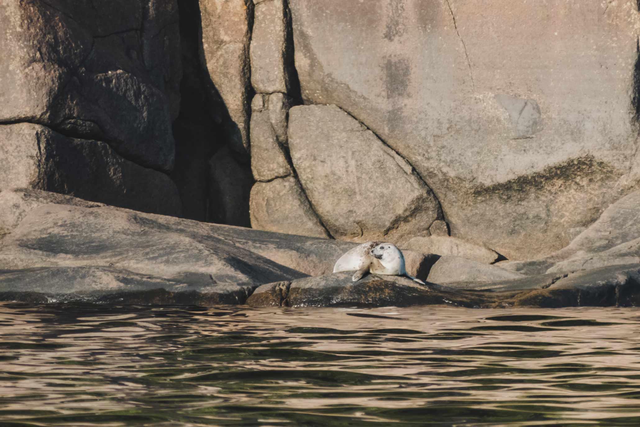 loup marin fjord